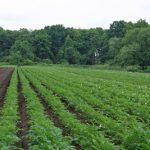 無農薬、有機肥料のお野菜達