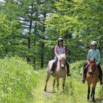 森の馬小屋での乗馬体験は日本でここだけだと