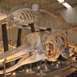 視覚障害のある方と化石博物館へ