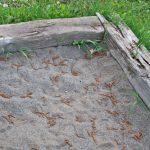 お砂場にミミズがいっぱい?
