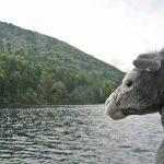 ロバ君、然別湖へ