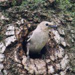 裏の大木から巣立った小鳥達