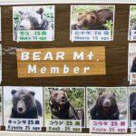 熊牧場と侮るなかれ、ベアマウンテンは迫力とガイドの魅力が!