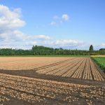 十勝の畑はみんな同じ作物を作っているの?