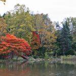 紅葉の色づきがいい今年、清水公園は桜だけじゃないようです